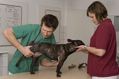 Themenshop Arthrose beim Hund