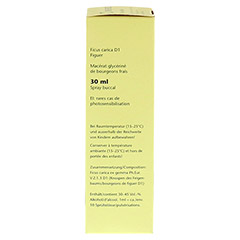 GEMMO Ficus carica D1 Spray 30 Milliliter N1 - Linke Seite