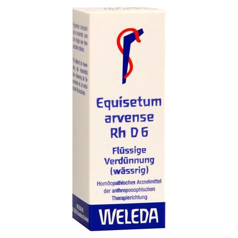 EQUISETUM ARVENSE Rh D 6 Dilution 20 Milliliter N1