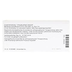 MEMBRANA SYNOVIALIS GL D 30 Ampullen 10x1 Milliliter N1 - Rückseite