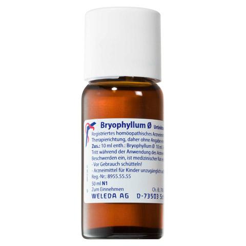 BRYOPHYLLUM D 1 Dilution 50 Milliliter N1