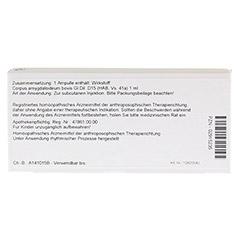 CORPUS AMYGDALOIDEUM GL D 15 Ampullen 10x1 Milliliter N1 - R�ckseite