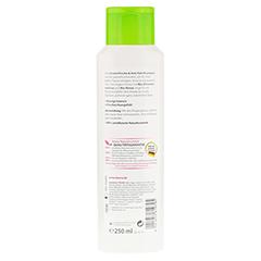 LAVERA Haar Frische & Anti-Fett Shampoo 250 Milliliter - Rückseite