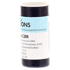 IGNATIA C 200 Einzeldosis Globuli 0.5 Gramm N1 - Rechte Seite
