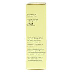 GEMMO Rosa canina D1 Spray 30 Milliliter N1 - Rechte Seite