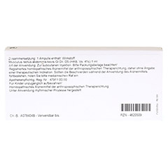 MUSCULUS RECTUS abdominis GL D 5 Ampullen 10x1 Milliliter N1 - R�ckseite