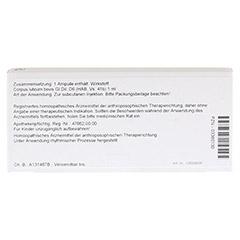 CORPUS LUTEUM GL D 6 Ampullen 10x1 Milliliter N1 - Rückseite